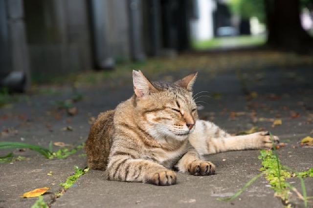 Resultado de imagem para gatos de rua
