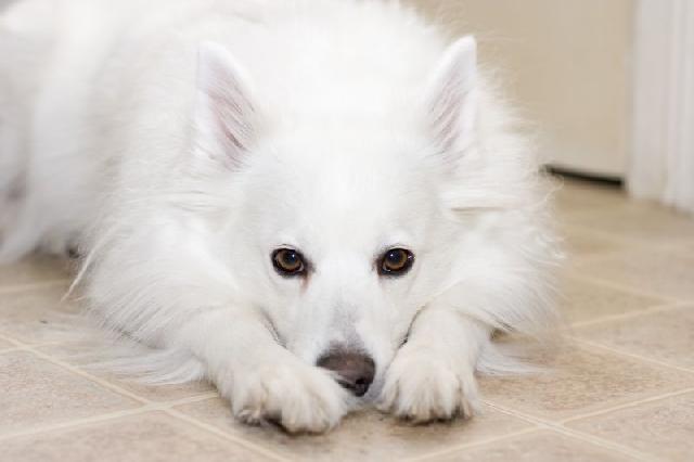 cachorro-branco-foto