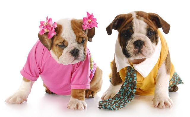 cachorro-macho-ou-femea