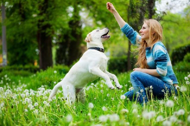 cachorros-felizes