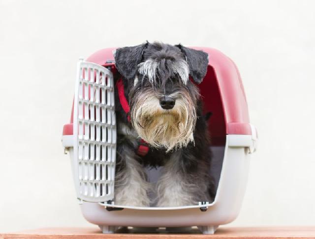 caixa-transporte-cachorro