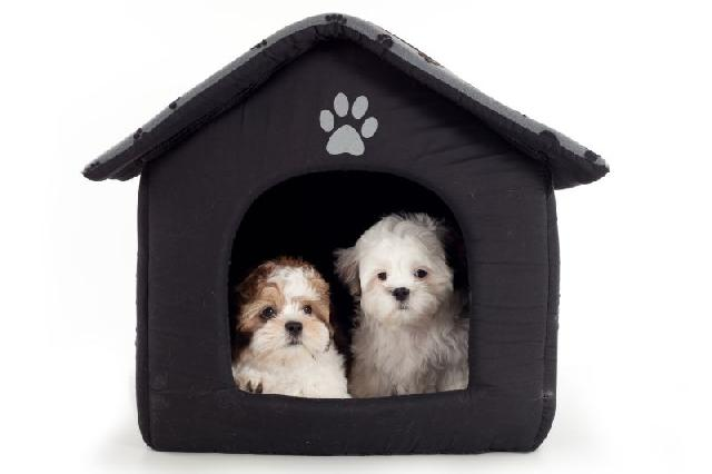 casa-de-cachorro