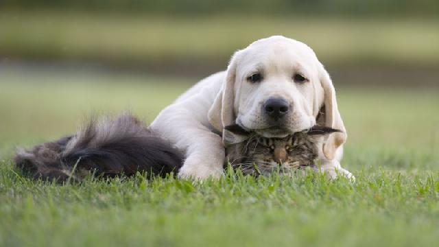 instinto-cachorros-gatos