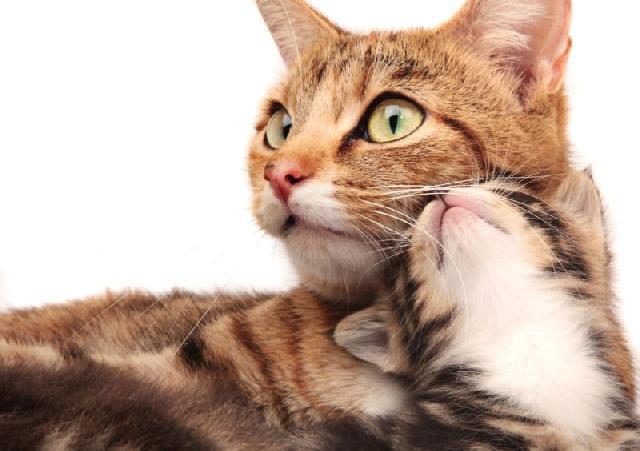 instinto-gatos