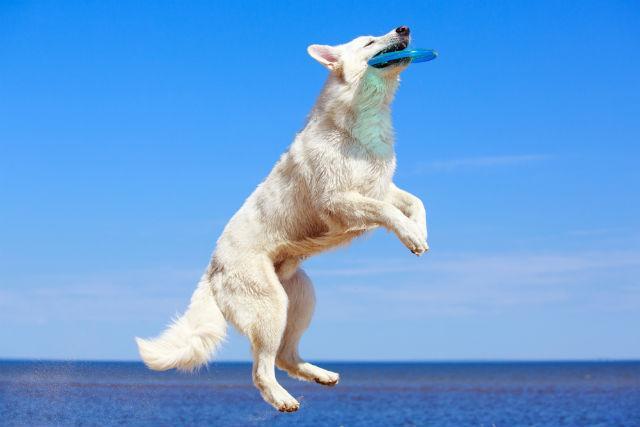 Sinais da inteligência canina