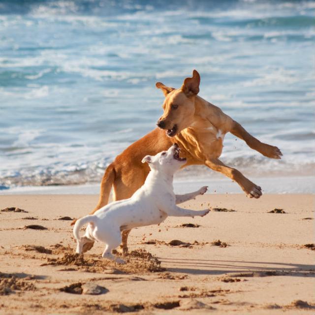 Como socorrer a hipertermia em cães e gatos?