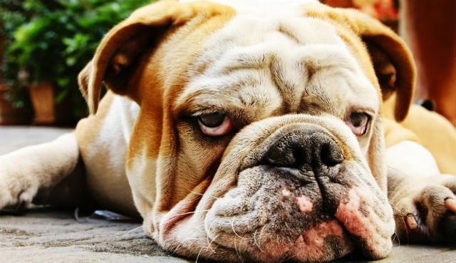 Intoxicação de cães e gatos por carbamato