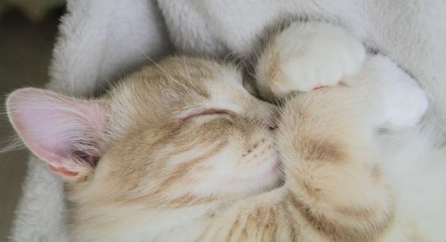 Intoxicação de cães e gatos por veneno de rato