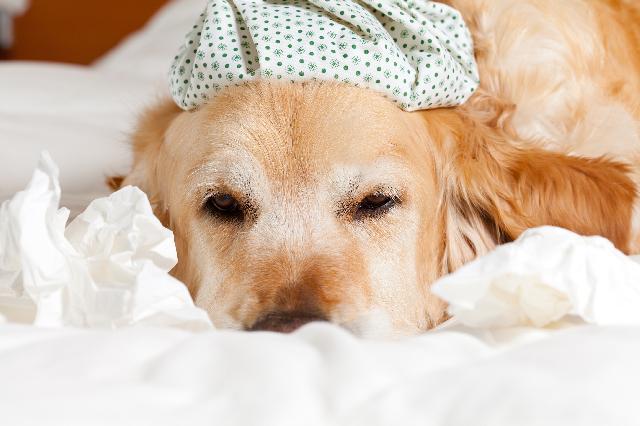 Intoxicação de cães