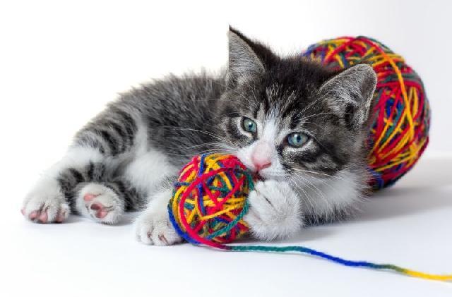 jogos-com-gatinhos