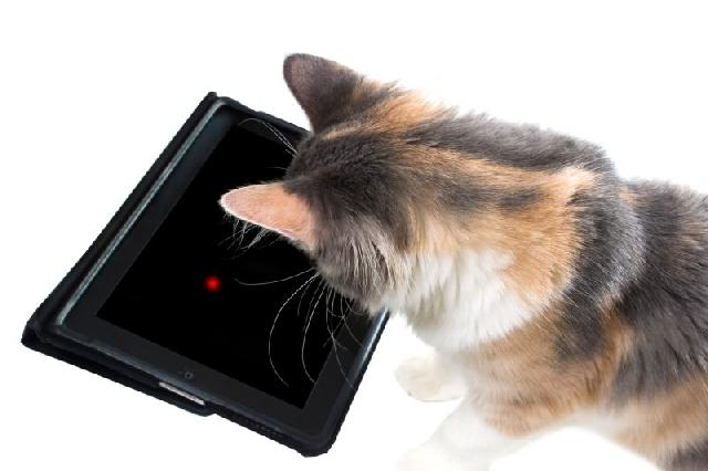 jogos-gatos-videogame