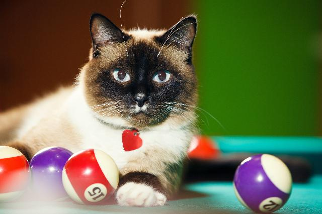 Jogos de gatos