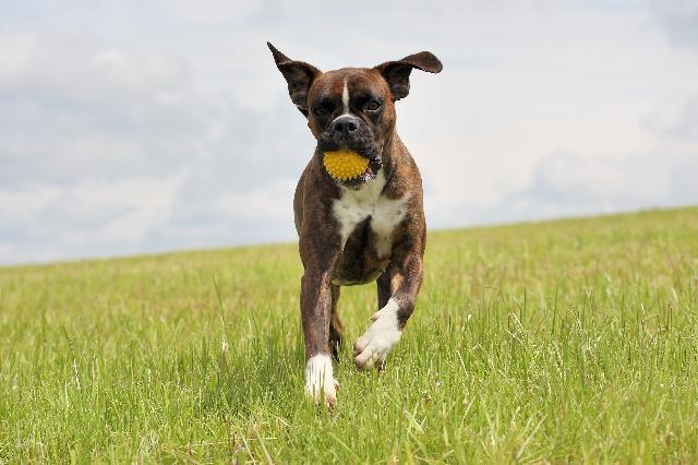 Jogos para Cães