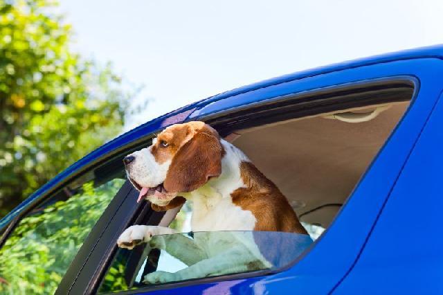 legislacao-transportar-animais