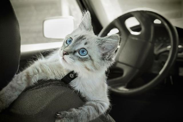 leis-para-transporte-animais
