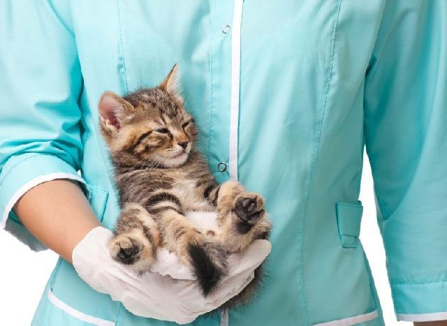 leucemia-gatos
