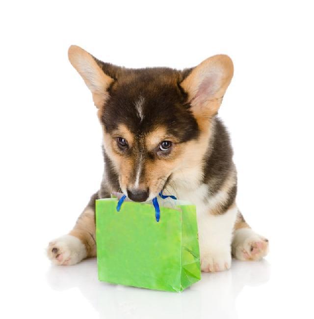 levar-cachorro-shopping