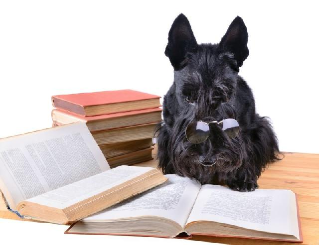 literatura-canina