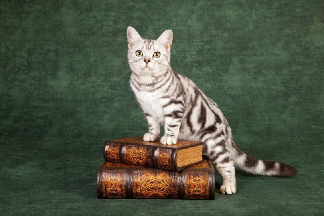 livros-gatos