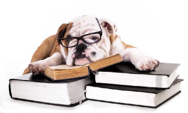 livros-sobre-cachorros
