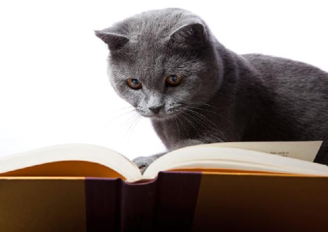 livros-sobre-gatos