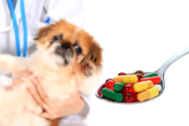 medicamentos-para-caes