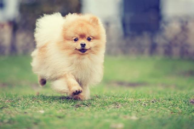 Mini Cães
