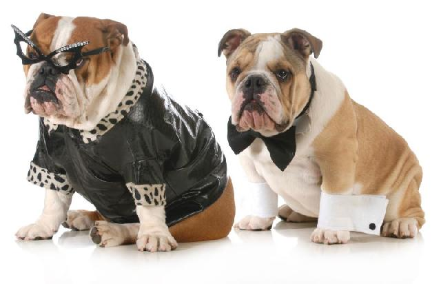 modelos-roupas-para-cachorros