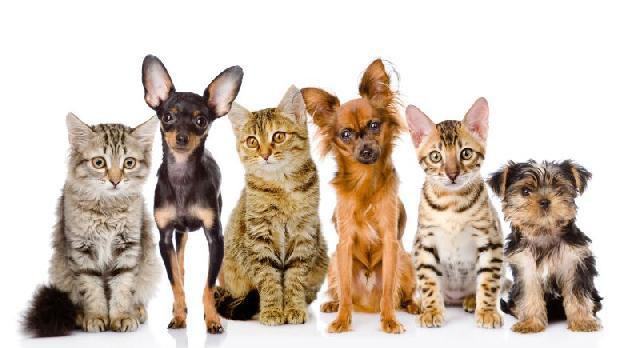 mundo-animais-caes-gatos
