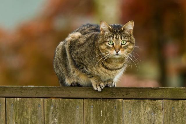 mundo-animal-gatos
