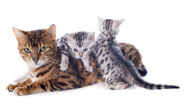 Mundo dos felinos