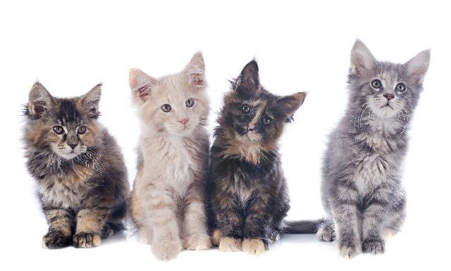 Conheça o Mundo dos Gatos e suas Curiosidades