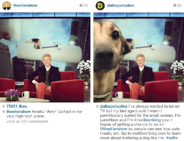 Muttbombing do Dallas Pets Alive! em post de Ellen DeGeneres
