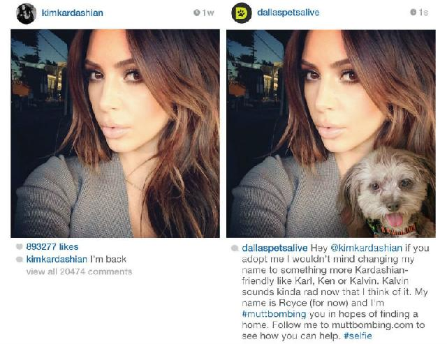 Muttbombing do Dallas Pets Alive! em post de Kim Kardashian