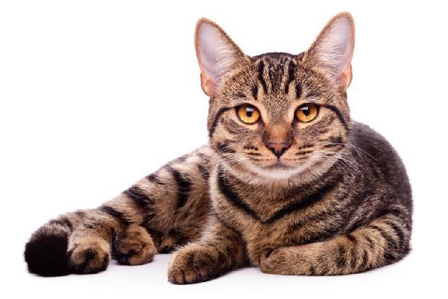 nomes-para-felinos