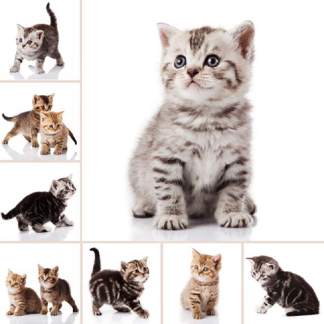 nomes-para-gatinhos