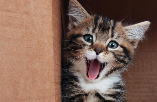 nomes-para-gatos