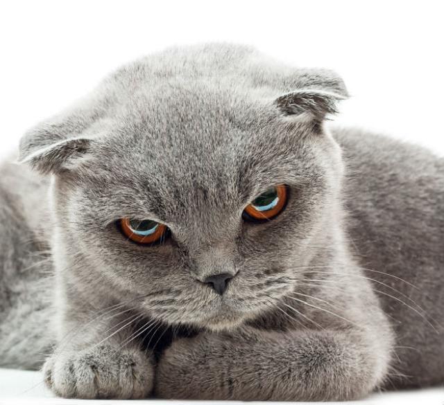 Entenda a obstrução urinária em pets