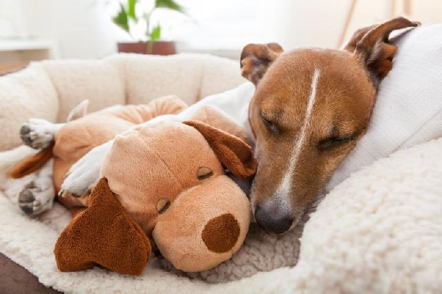Oncologia veterinária é esperança para animais doentes