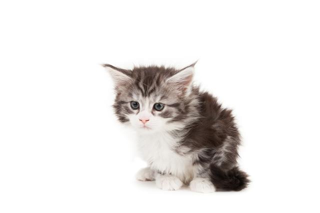 Parto de fêmeas cadelas ou felinas