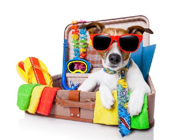 passaporte-cachorros-gatos