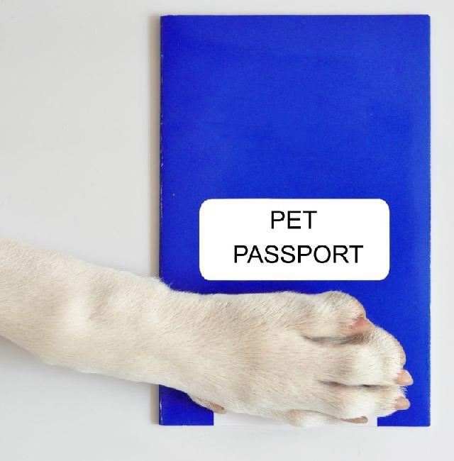 passaporte-caes-gatos