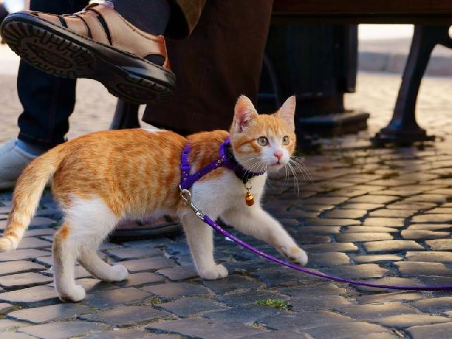 passear-com-gato