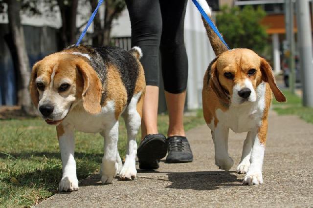 Passear com cães torna as pessoas mais sociáveis