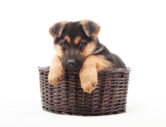 Cuidados com as patinhas dos cães no verão