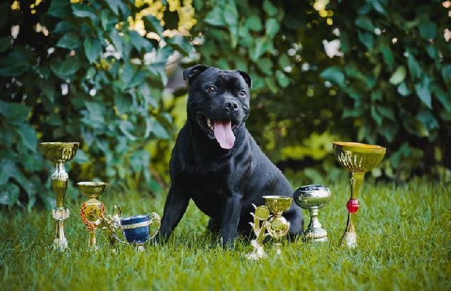 pedigree-cachorros