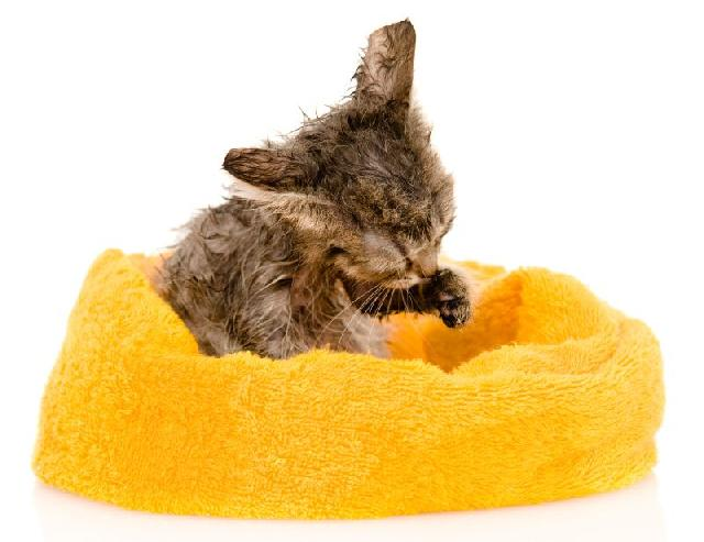 pet-shop-para-gatos-comprar-acessorios-felinos