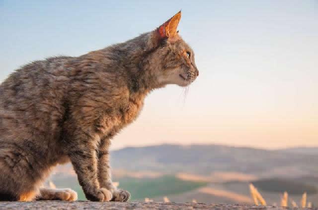 Picada de animal peçonhento em cachorros e gatos