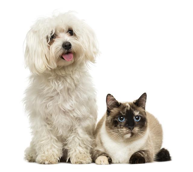 Picada de animais peçonhentos em cães e gatos