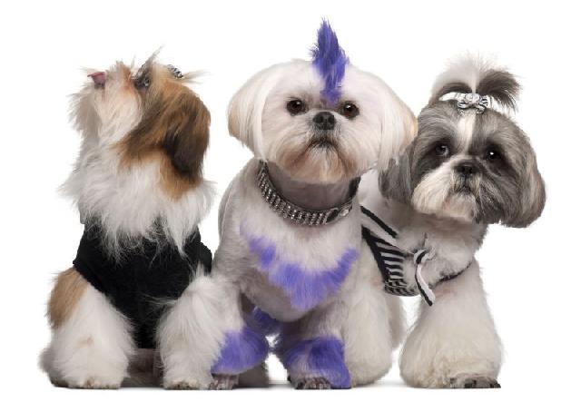 Piercing para Cães